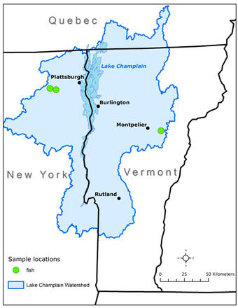 Genetic Analysis Of The Brown Brook And Tiger Trout Populations - Lake champlain on us map