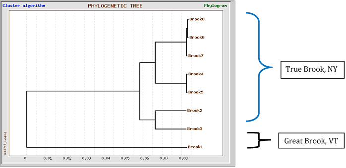Figure 11: Phylogenetic tree for Sfo-C-79 for brook trout sequences. Samples were collected from two different states, and several sites along True Brook. GeneBee software was used to generate image