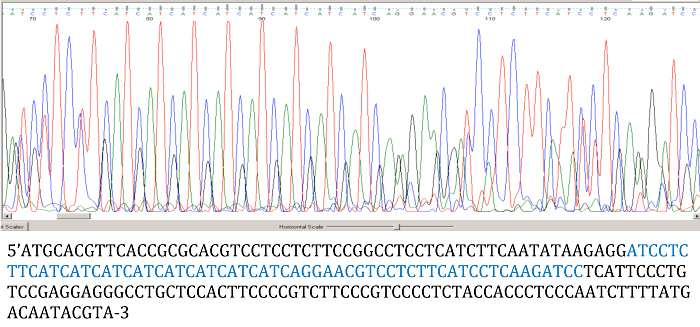 Figure 9: Chromatogram of DNA Brook trout 3 Sfo-C129 Sequence. The highlighted blue sequence represents the sequence shown in the chromatogram.