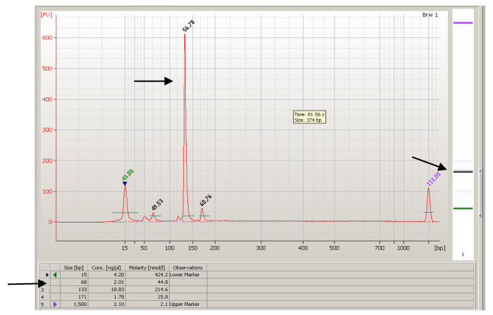 Figure 3: Bioanalyzer results for a brown trout DNA sample using the Sfo-C113 genetic marker. The arrows represent the three areas used in the analysis of determining the size of the PCR product (133 bp).
