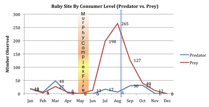 an analysis of the effects of predation Effects because only large-mouthed predators are able to consume these relatively  variance contributes to the error term in our analysis but does not affect.