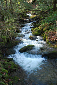 sterling-great-smoky-mountains-national-park
