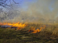 The prescribed burn at the Atkinson Dewey Street Prairie, April, 2008.