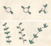 The Secret Of The Fibonacci Sequence In Trees