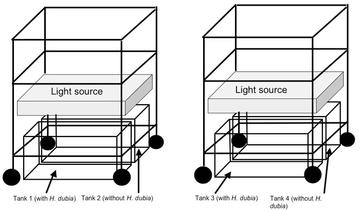Figure 1: Diagram of the two carts under which the four tanks were placed.