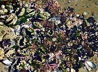 Biodiversity inside a tide pool