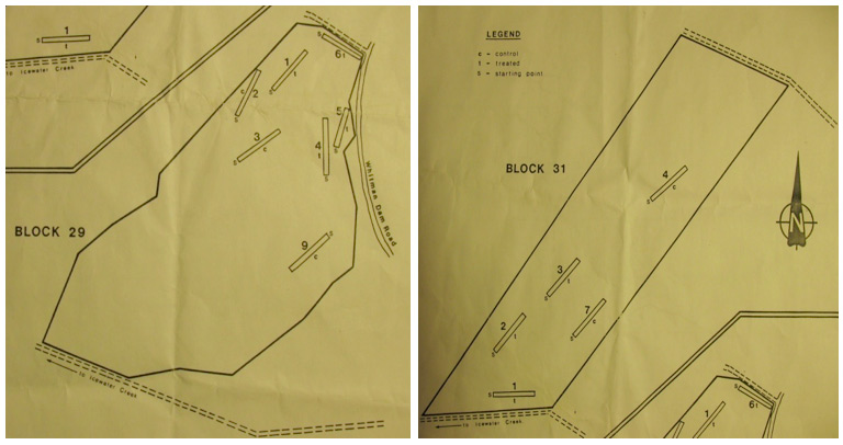 1969 Goulais River Valley Experiment Layout shows the mechanical site preparation and chemical tending treatments used within each plot. The maps represent arial views of the site preparation blocks 29 and 31.