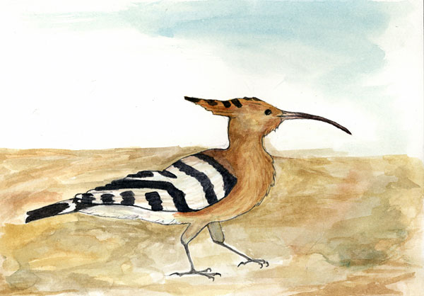 Fig. 3: The Common Hoopoe