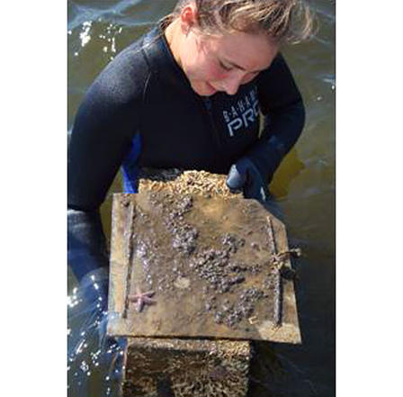 Recovering biofouling apparatus from Forked River mouth.