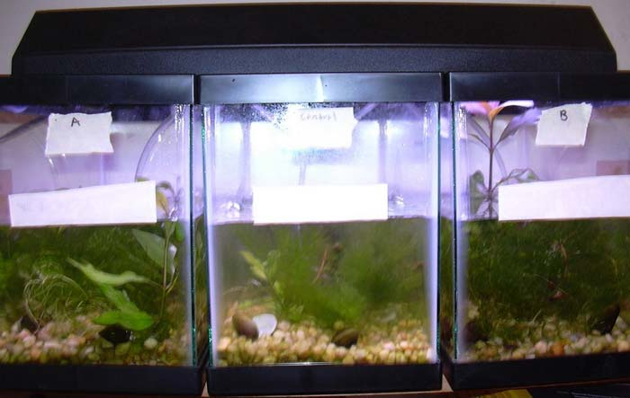 The simulated aquatic ecosystem: tank A (left), control tank (center), and tank B (right).