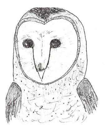 white owl barn owl read and wonder