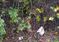 Litter in the underbrush upstream