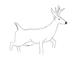 Figure 3: A sketch of a white-tailed deer.