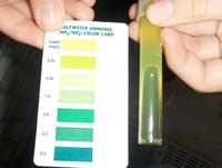 Figure 5: Ammonia test on day 9 (January 2) showing ammonia levels of between 0 and .25 ppm