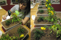 Megan uses a moisture meter to measure soil moisture (left). Plants at the beginning of the project (right).