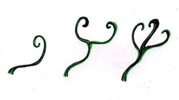 Three tendril types observed.
