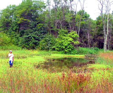 Noah inspecting a wetlands habitat at Blues Creek Preserve.