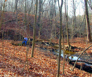 Fall visit to creek bed to record GPS coordinates of toad location at Hogback Preserve.