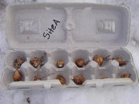 Site A in an egg carton
