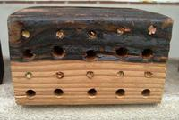 Only the 2/8-inch wide holes are being nested by the solitary bees.