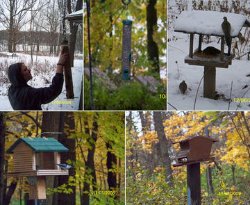 Clockwise from left: Sheah changes seed at feeder #1; an American Goldfinch at tube feeder #3; mourning doves on platform feeder #5; the squirrel-proof feeder #4 hosts a White-breasted nuthatch; and a white-breasted Nuthatch on the Plexiglas feeder #2.