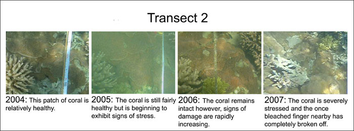 Figure 15: A Four-year comparison along Transect two taken each year at the same location. The degradation over time is seen.