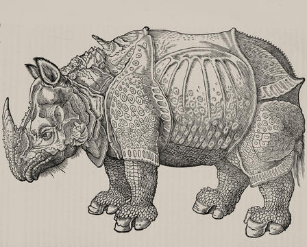 Natural Histories - Rhino