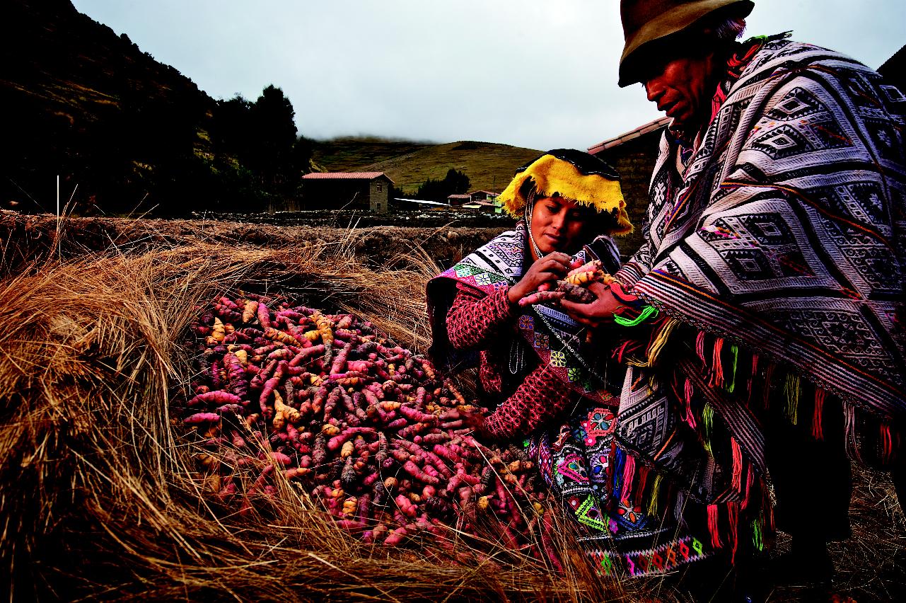 Preserving Potato Diversity in Peru