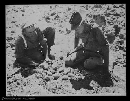 Roy Chapman Andrews and George Olsen inspecting the even dozen dinosaur egg nest, Mongolia, 1925 ©AMNH/410763 Digital Special Collections