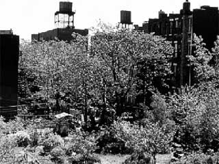 Pleasant Village Community Garden, East Harlem. Photo courtesy of Green Guerillas.