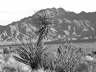 Provinces Mountains Wilderness, Mojave National Preserve, California. Photo © George Wuerthner.