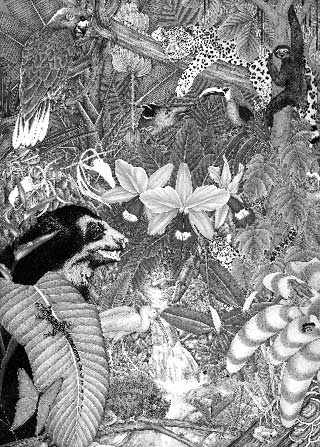 Black-and-white illustration of a jungle scene with a jaguar, sloth, different types of birds, and other animals hidden in foliage.