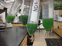 Centrifuged and resuspended algae