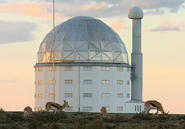 Antelope graze in front of the domed Southern African Large Telescope.