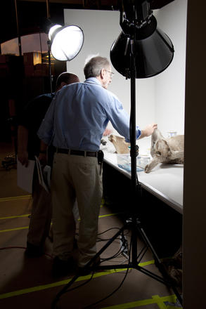 Stephen Quinn examines a specimen being photographed.