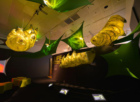 Tardigrade models 10 foot tall