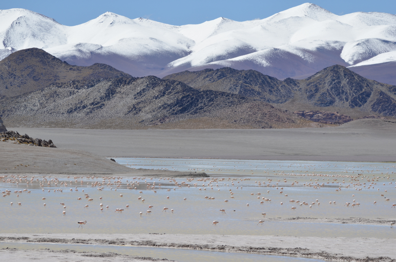 Developing a Regional Conservation Strategy for Flamingos in the Americas | AMNH